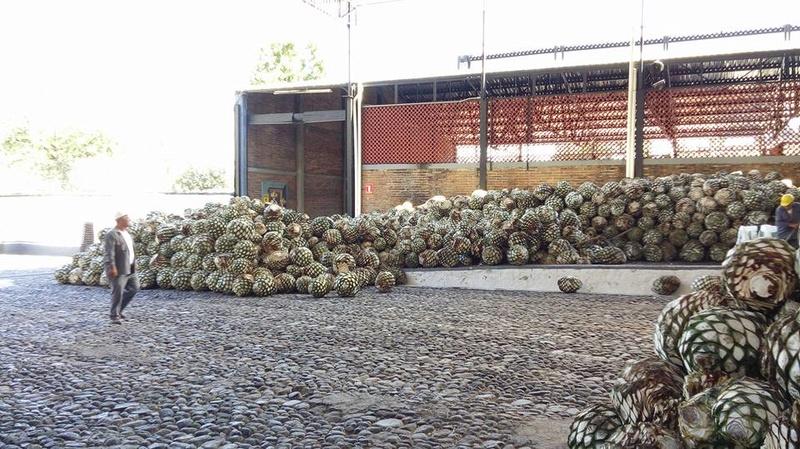 Tequila - Orendain Tour 16194910