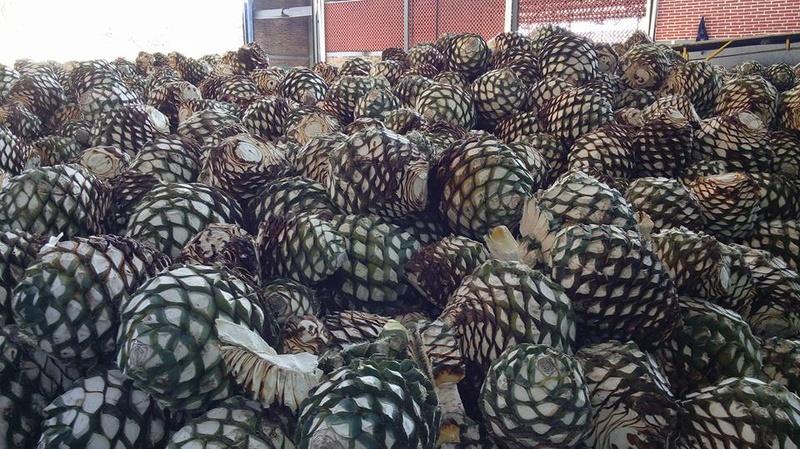 Tequila - Orendain Tour 16299311