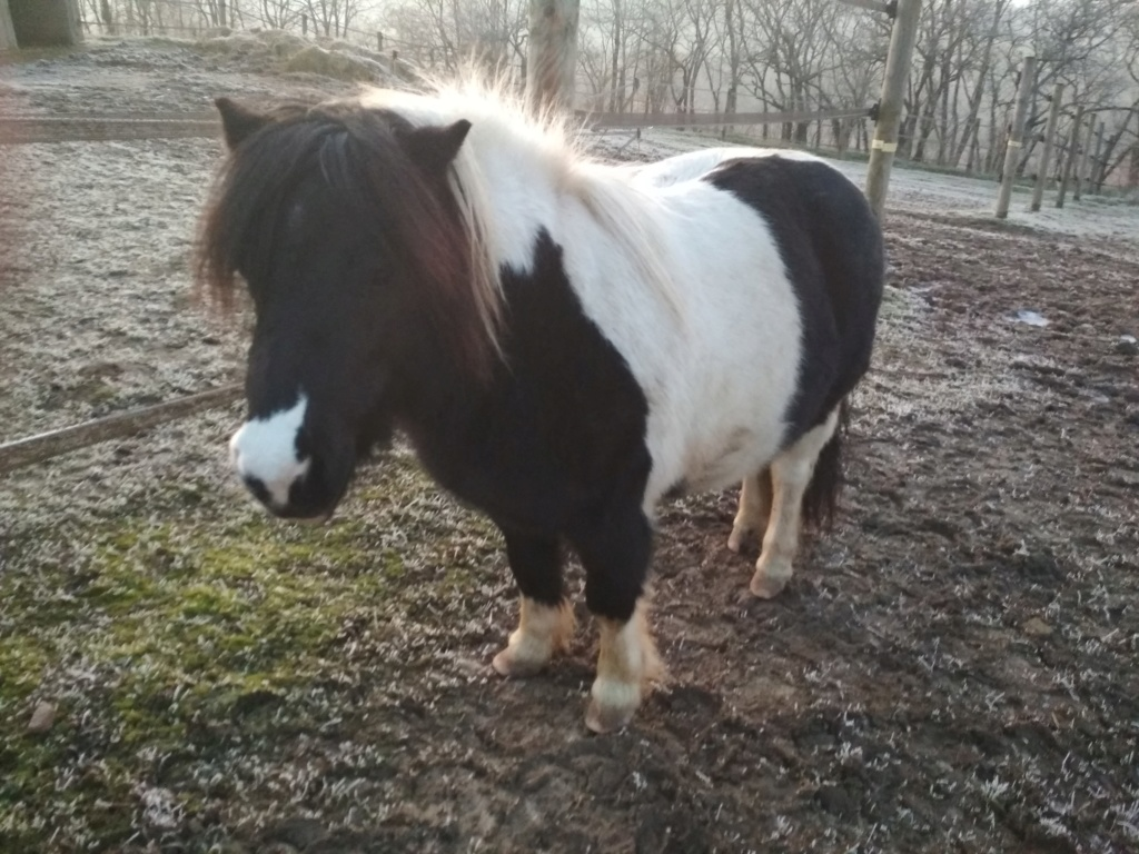 Exercice supplémentaire avec un poney Epona_10