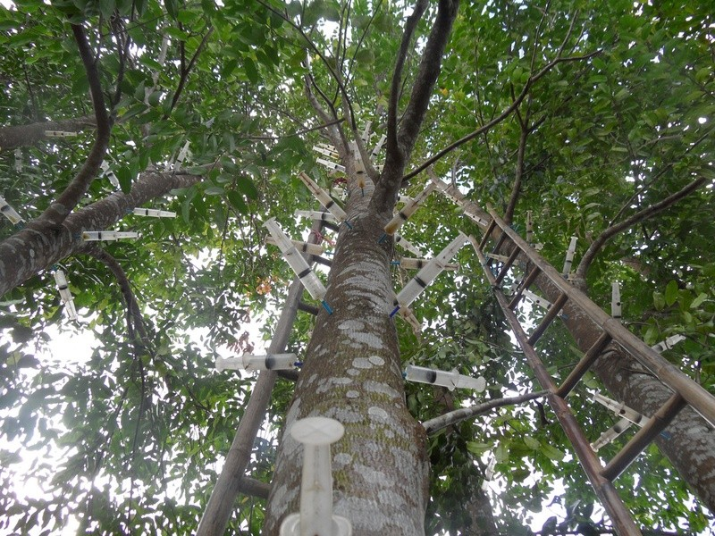 Agarwood, මුරුංගා & other Plantation ideas - Page 2 61587310