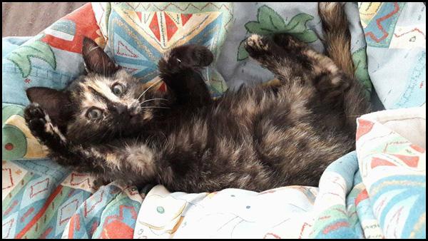 Petite MIA à l'adoption 14954310