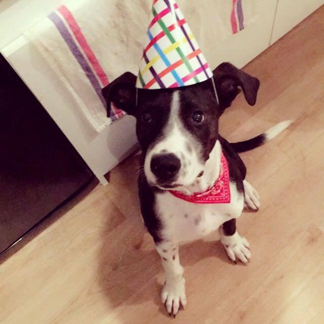 MEZZO à l'adoption 16117810