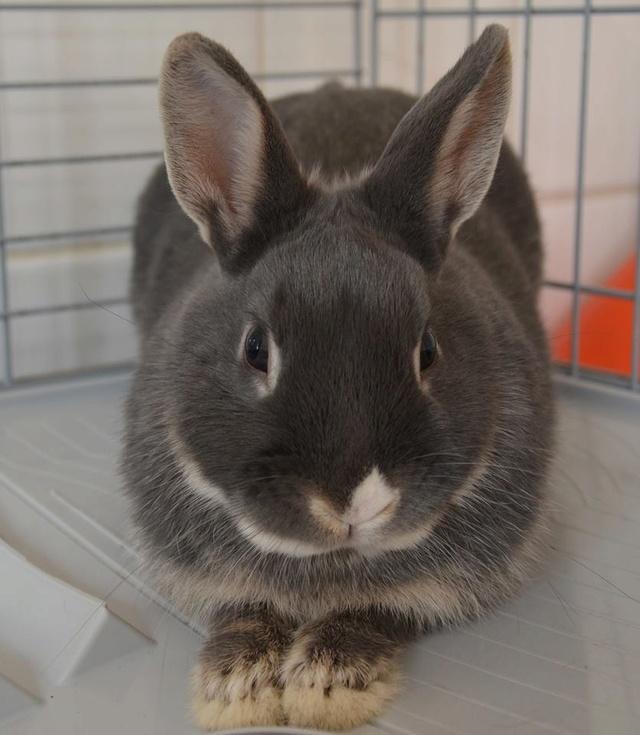 Petite lapine à l'adoption 16559310
