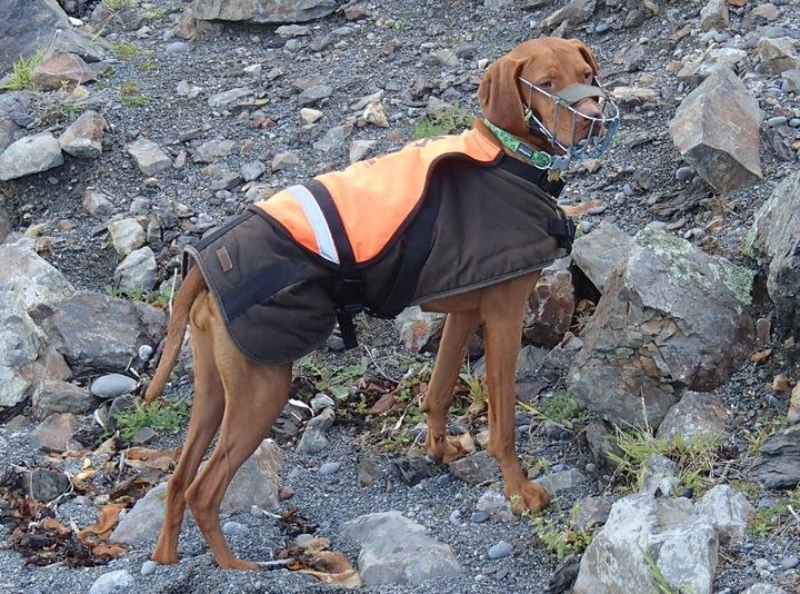 Des chiens au secours des espèces menacées Eight_10