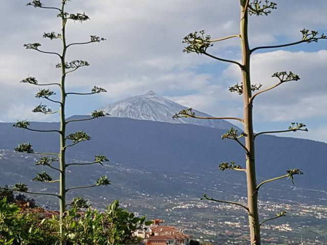 Things to do in January 2017 Teide-10