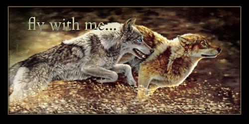 La poursuite d'une quête ! [TERMINEEEEEEEE !!] Loups11