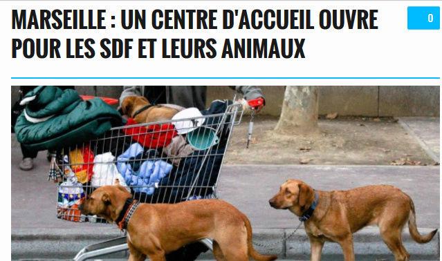 Marseille, ouverture d'un centre pour les SDF et leurs chiens Mrs10