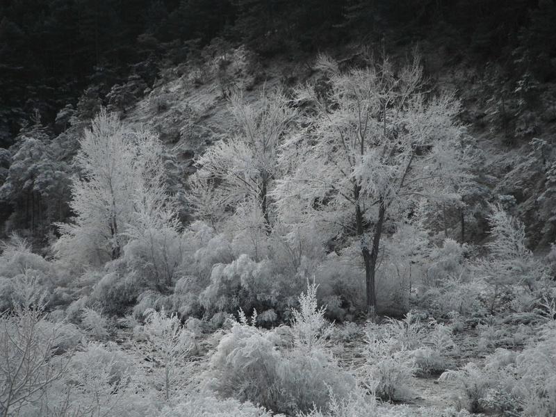 Coup de froid sur la Vaïre Dscf5216