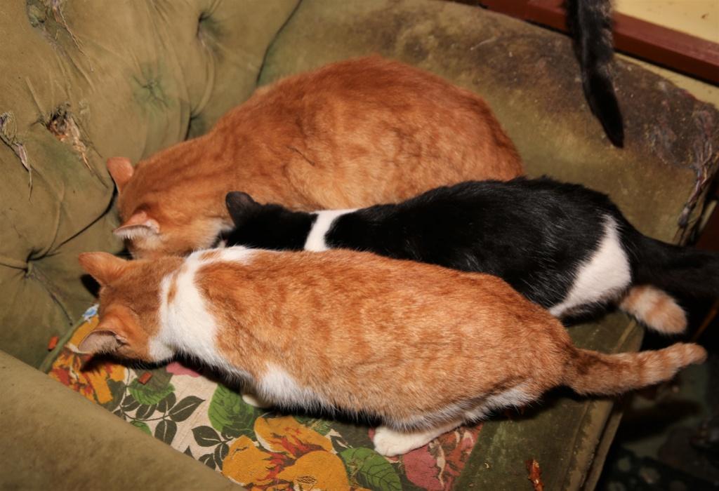 Parrainage des chats de Mme Angela C1010