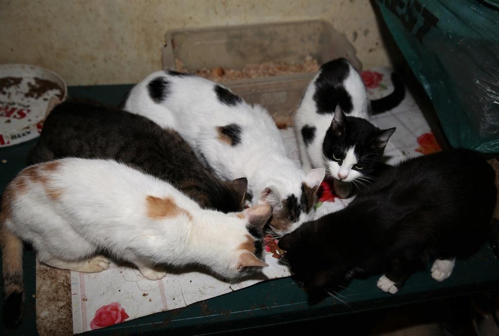 Parrainage des chats de Mme Angela C1210