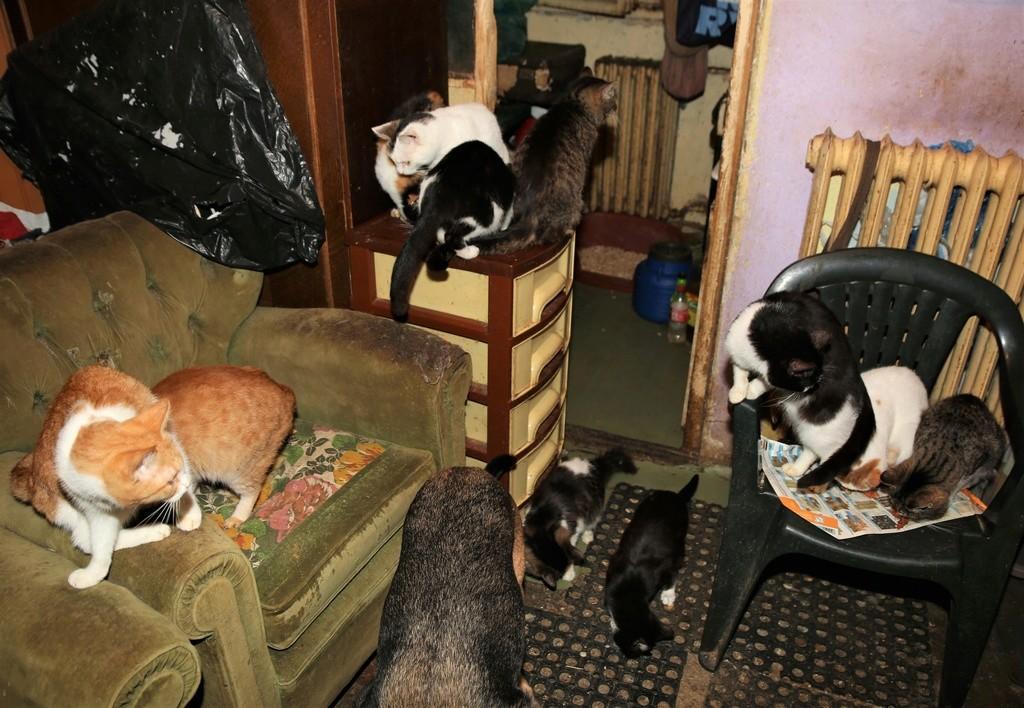 Parrainage des chats de Mme Angela C1310