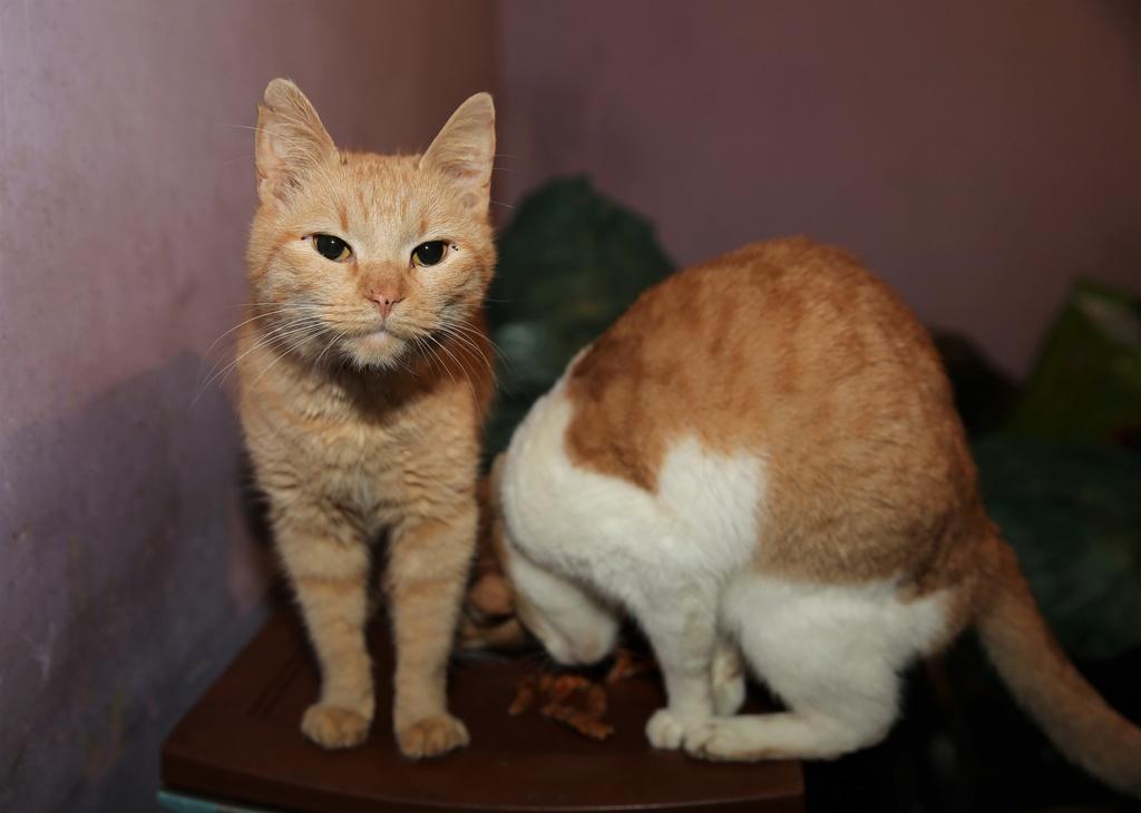 Parrainage des chats de Mme Angela C1510