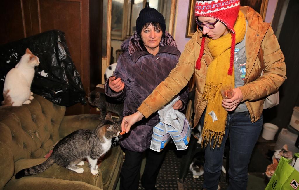Parrainage des chats de Mme Angela C210