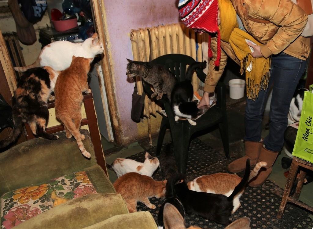 Parrainage des chats de Mme Angela C410