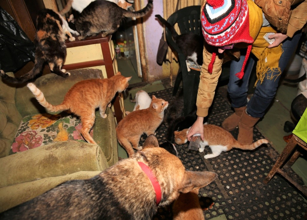Parrainage des chats de Mme Angela C510