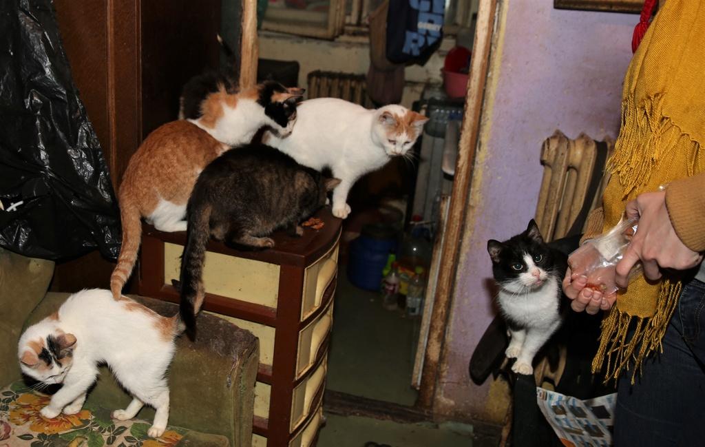 Parrainage des chats de Mme Angela C610