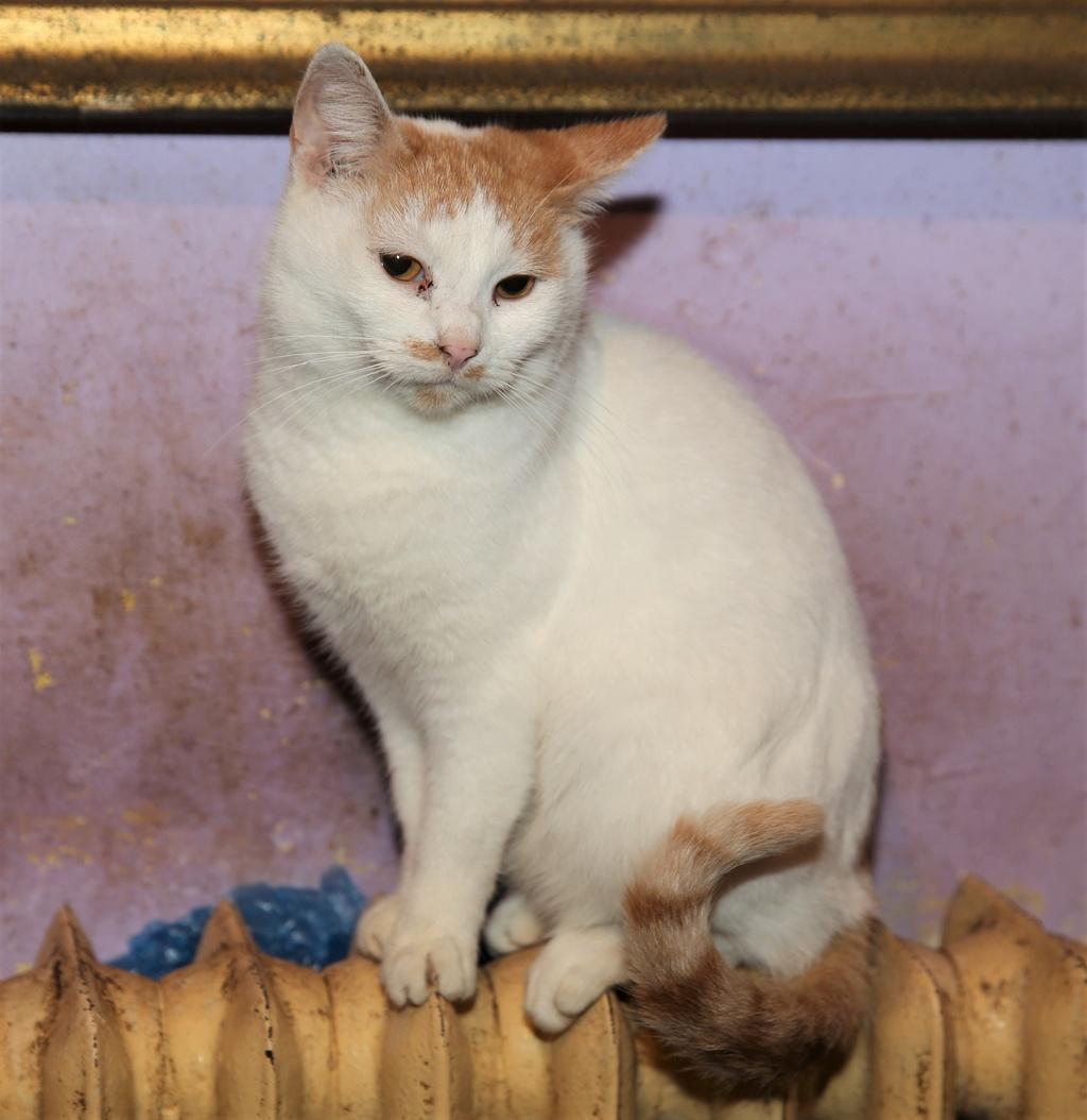 Parrainage des chats de Mme Angela C810