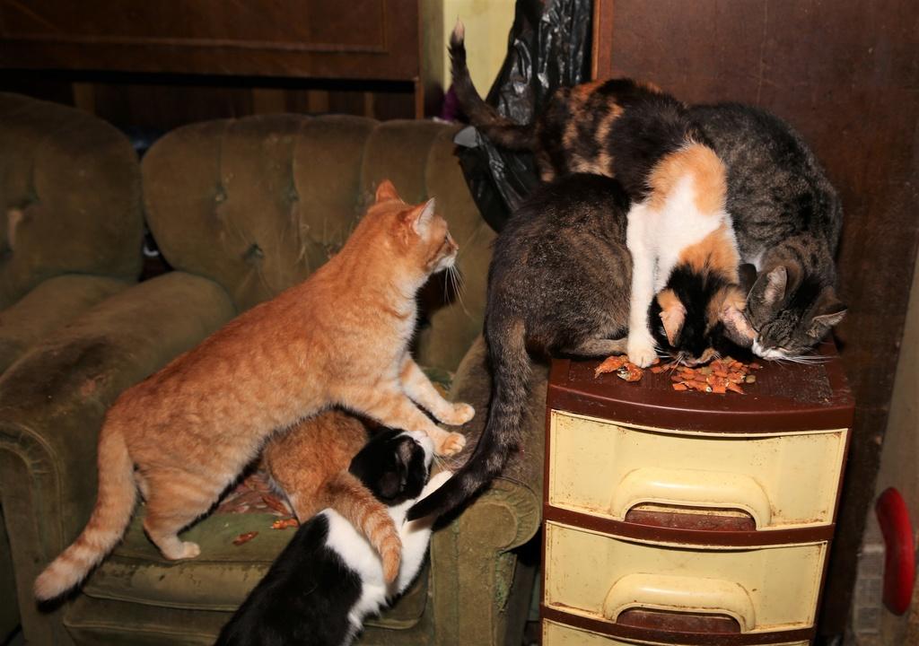 Parrainage des chats de Mme Angela C910