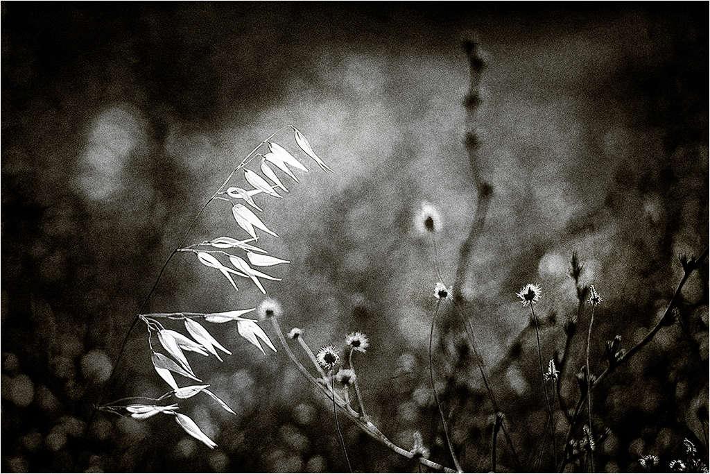 """"""" avant la nuit...."""" Vivi_810"""