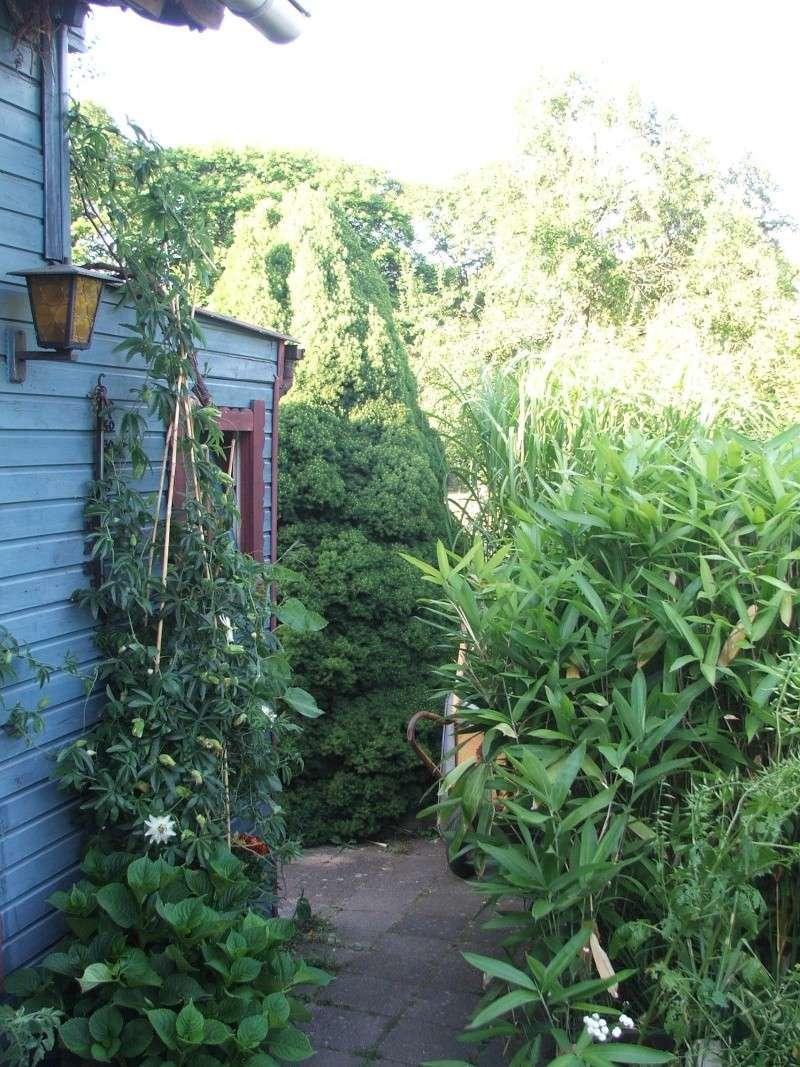 """Passiflora - Passionsblume - kleine """"Juwelen"""" - alles über Aussaat, Pflege, Vermehrung und natürlich Blütenbilder :) - Seite 6 08810"""