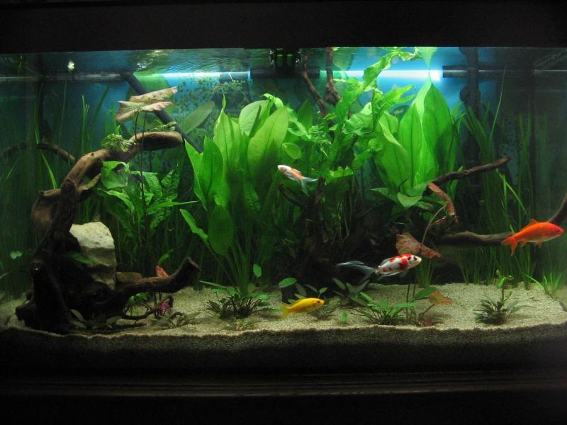 Le 210 litres des poissons rouges (Nouveau Départ : page 22) Img_1210