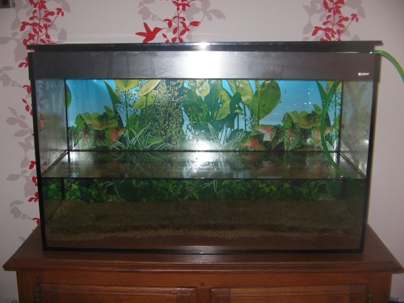 Le 210 litres des poissons rouges (Nouveau Départ : page 22) Img_1211