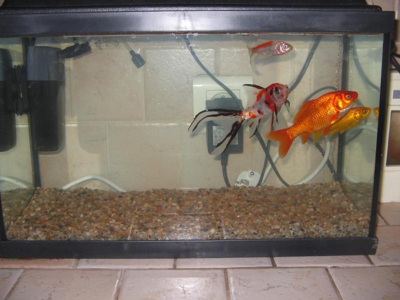 Le 210 litres des poissons rouges (Nouveau Départ : page 22) Img_1212