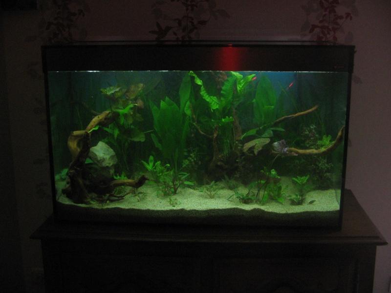Le 210 litres des poissons rouges (Nouveau Départ : page 22) Img_1214