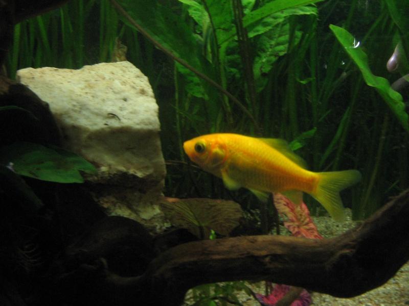 Le 210 litres des poissons rouges (Nouveau Départ : page 22) Img_1310
