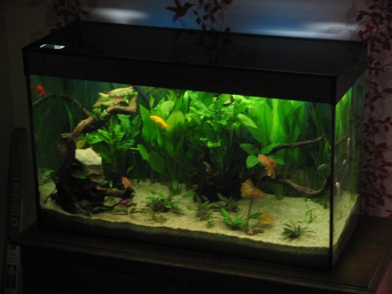 Le 210 litres des poissons rouges (Nouveau Départ : page 22) Img_1312