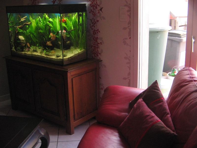 Le 210 litres des poissons rouges (Nouveau Départ : page 22) Img_1313