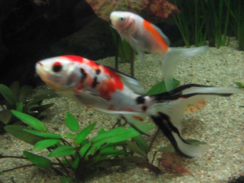 Le 210 litres des poissons rouges (Nouveau Départ : page 22) Img_1314
