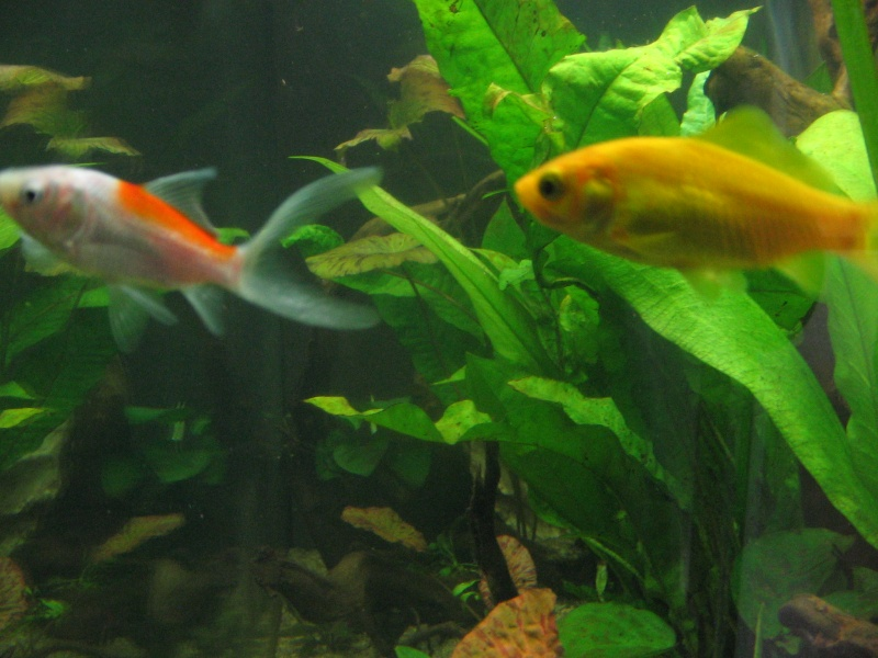 Le 210 litres des poissons rouges (Nouveau Départ : page 22) Img_1316
