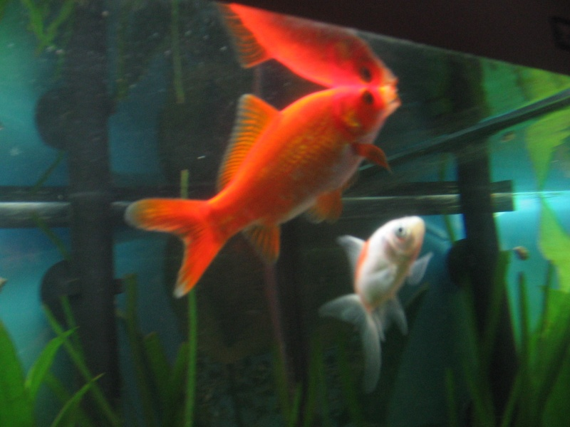 Le 210 litres des poissons rouges (Nouveau Départ : page 22) Img_1317