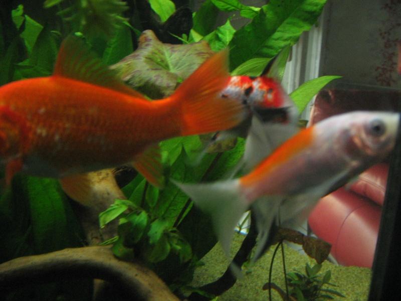 Le 210 litres des poissons rouges (Nouveau Départ : page 22) Img_1318