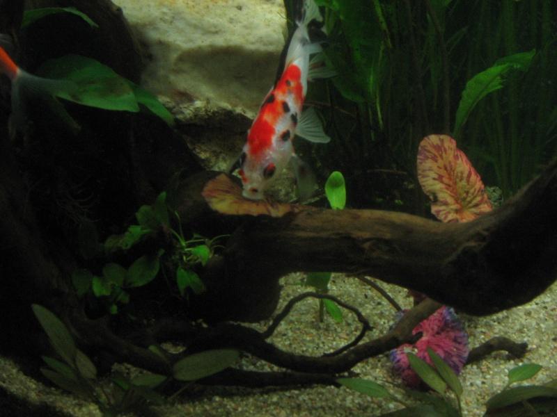 Le 210 litres des poissons rouges (Nouveau Départ : page 22) Img_1320