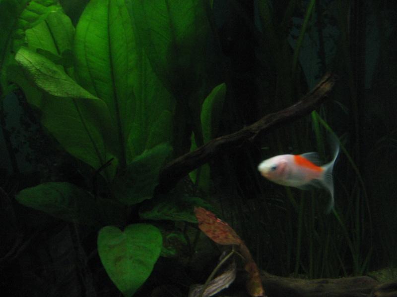 Le 210 litres des poissons rouges (Nouveau Départ : page 22) Img_1321