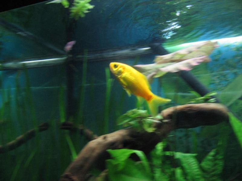 Le 210 litres des poissons rouges (Nouveau Départ : page 22) Img_1325