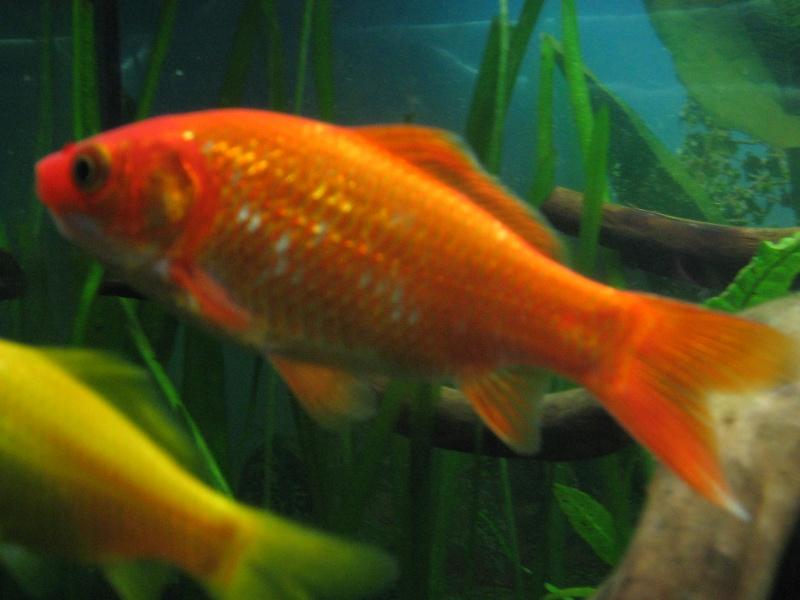 Le 210 litres des poissons rouges (Nouveau Départ : page 22) Img_1410