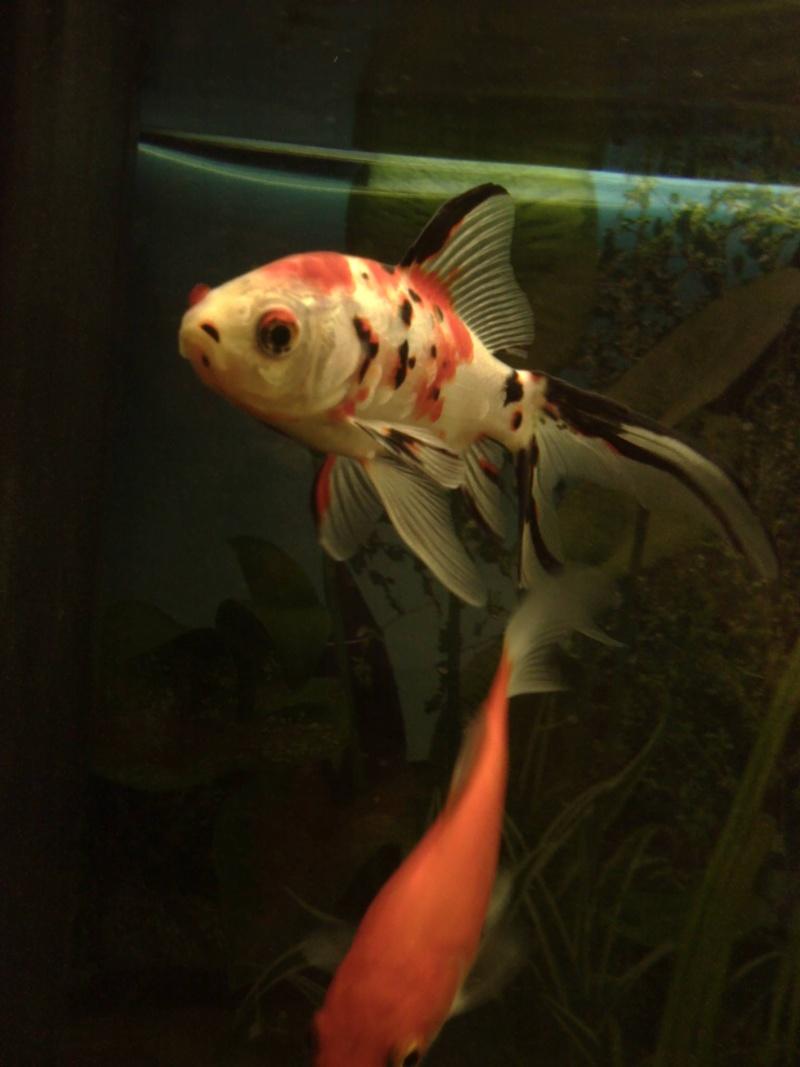 Le 210 litres des poissons rouges (Nouveau Départ : page 22) Img_2011