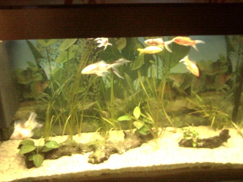 Le 210 litres des poissons rouges (Nouveau Départ : page 22) Img_2012