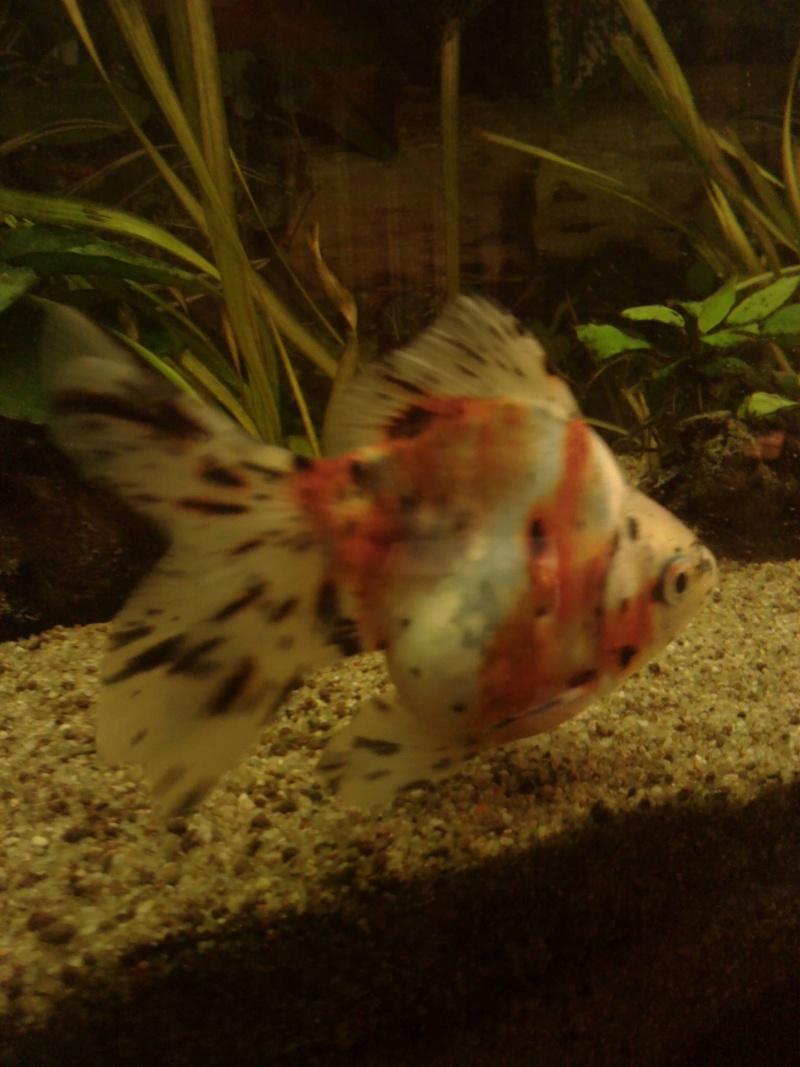 Le 210 litres des poissons rouges (Nouveau Départ : page 22) Img_2013