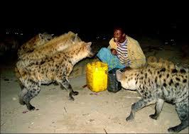 صور غريبة لرجل يطعم الضباع ويعيش معها Oao10