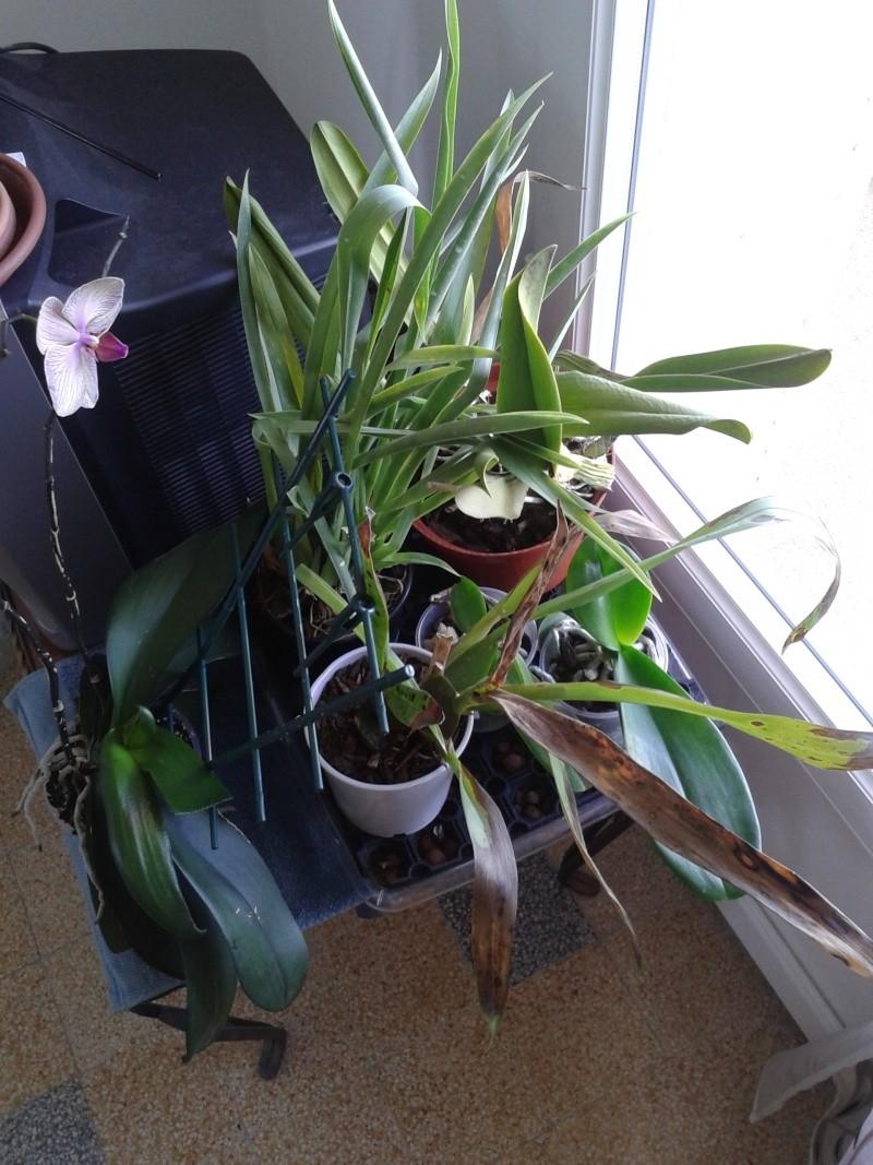 Nouvel habitat pour mes orchidées. 20130812