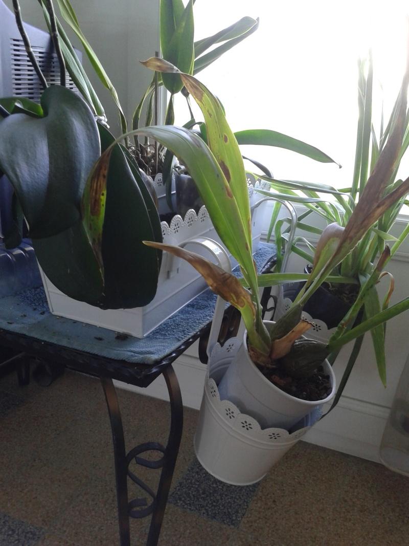 Nouvel habitat pour mes orchidées. 20130814