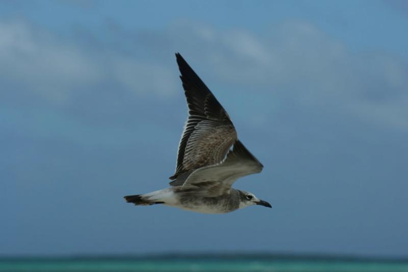 Oiseaux de Cuba - 1 Cuba_210