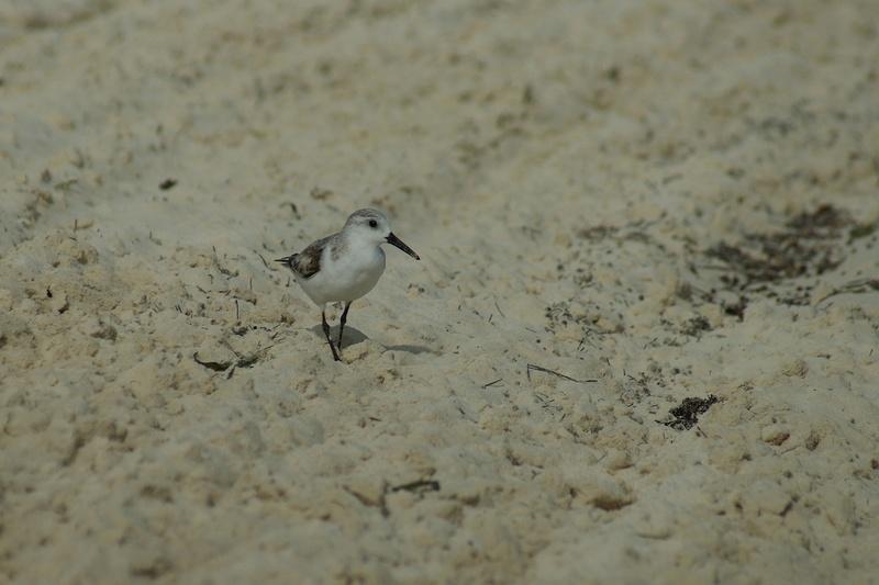 Oiseaux de Cuba - 1 Cuba_212