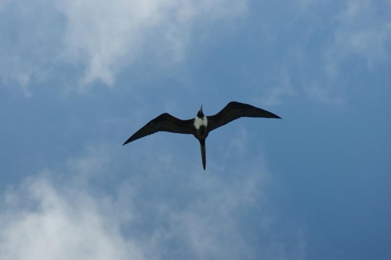 Oiseaux de Cuba - 1 Cuba_213