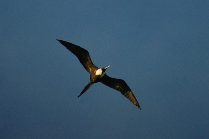 Oiseaux de Cuba -2 Cuba_219