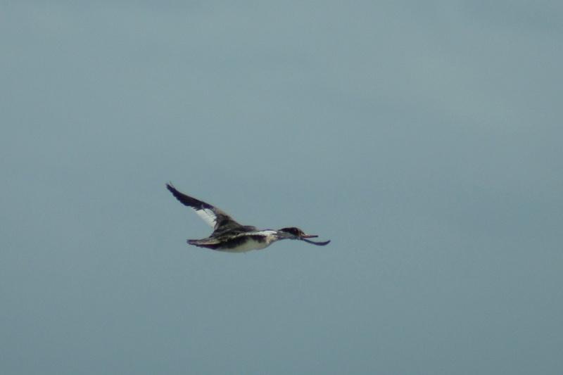Oiseaux de Cuba -2 Cuba_222